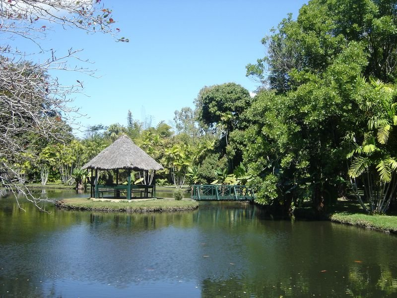 Le jardin botanique de pamplemousses fredetmaxilemaurice for Jardin pamplemousse